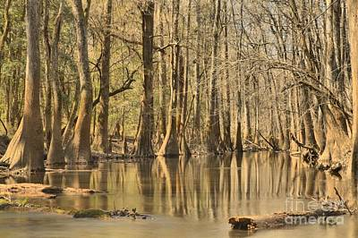 Cypress Swamp Photograph - Hall Of Cypress by Adam Jewell