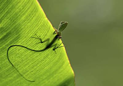 Lizard Photograph - Hallo by Yoline Santosa