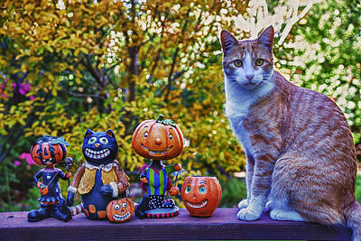Jack-o-lantern Photograph - Halloween Cat by Garry Gay
