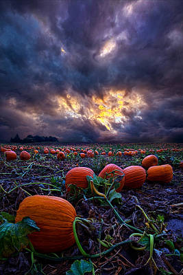 Pumpkin Patch Photograph - Halloween Is Near by Phil Koch