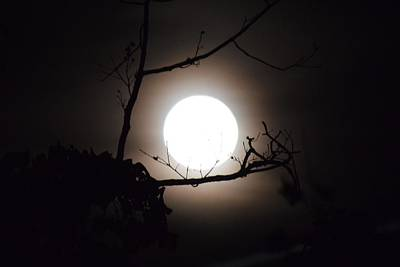Photograph - Halloween Moon by Gary Smith