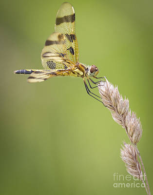 Photograph - Halloween Pennant by Ricky L Jones