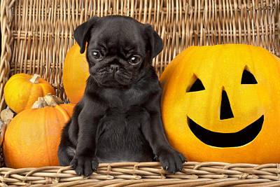Halloween Pug Art Print by Greg Cuddiford