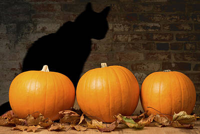 Halloween Pumpkins And The Witches Cat Art Print by Amanda Elwell