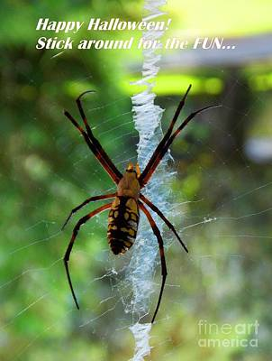 Photograph - Halloween Spider by Annette Allman