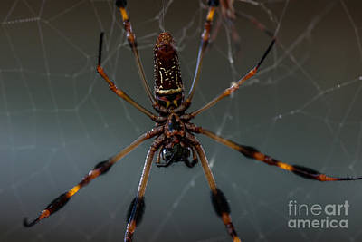 Photograph - Halloween Spider by Dale Powell