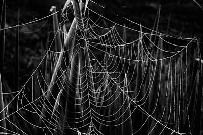 Photograph - Halloween Web by Tom Culver