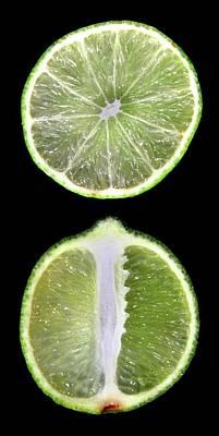 Halved Limes Art Print