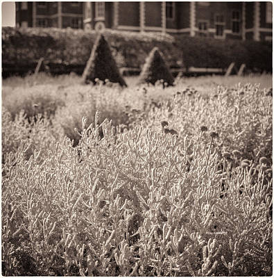 Photograph - Ham House Lavender Garden by Lenny Carter
