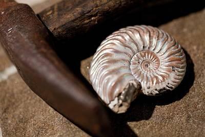 Hammer Photograph - Hammer And Ammonite Geology Emblems by Paul D Stewart