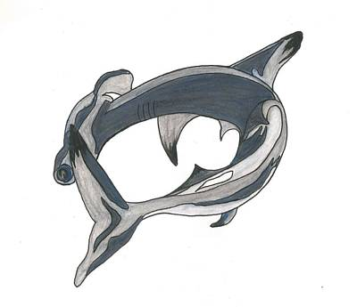 Drawing - Hammer Head Shark by Cherie Sexsmith