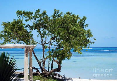 Hammock Stand On Playa Blanca Punta Cana Dominican Republic Art Print
