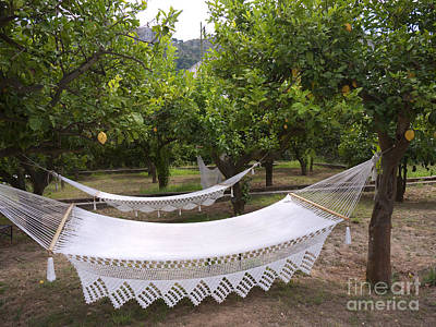 Photograph - Hammocks In Lemon Grove by Brenda Kean