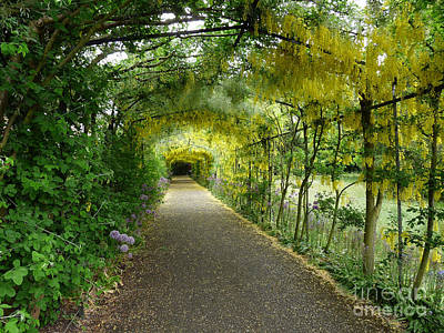 Catherine Howard Photograph - Hampton Court Palace Flower Tunnel by Deborah Smolinske