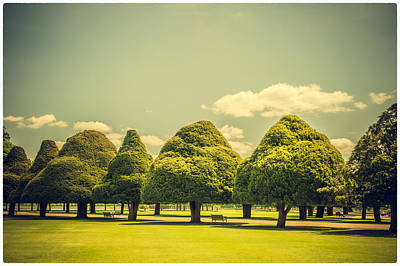 Photograph - Hampton Court Palace Gardens Triangular Trees by Lenny Carter