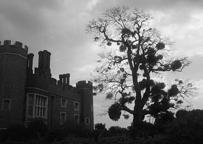 Hampton Court Tree Art Print