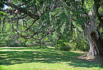 Photograph - Hampton Plantation Oaks by Linda Brown