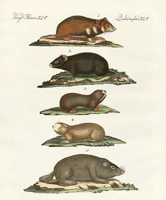 Hamster Drawing - Hamsters And Field Voles by Splendid Art Prints