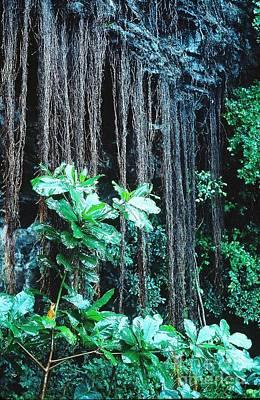 Photograph - Hana Rain Forest by Phillip Allen