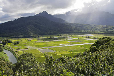Photograph - Hanalei Taro Fields by Saya Studios