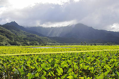 Photograph - Hanalei Valley Taro Field by Saya Studios