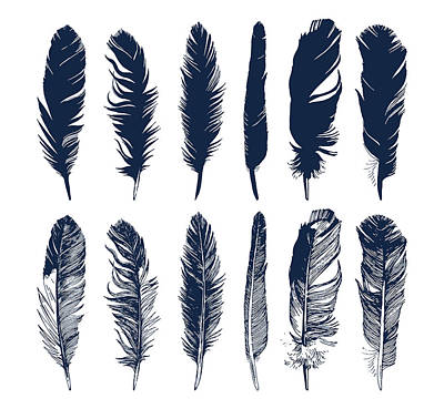 Digital Art - Hand Drawn Feathers Set On White by Mart m