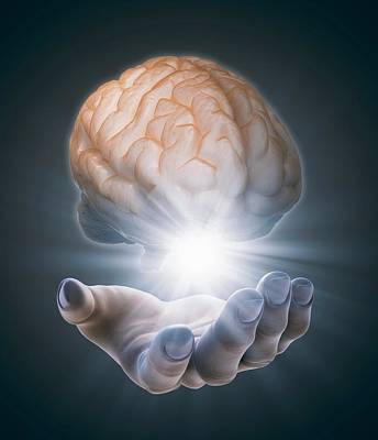 Human Brain Photograph - Hand Holding Brain by Andrzej Wojcicki