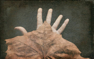 Photograph - Hand Of Nature by Michelle Ayn Potter