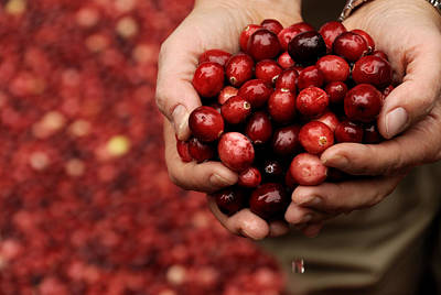 Photograph - Handful Of Fresh Cranberries by Phil Cardamone