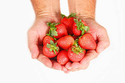 Photograph - Handful Of Strawberries by James BO Insogna