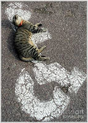 Handicat Parking Art Print by Barbie Corbett-Newmin