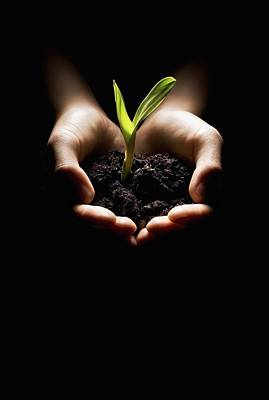 Conceptual Image Photograph - Hands Holding A Seedling by Chris and Kate Knorr