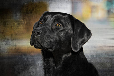 Print featuring the photograph Handsome Black Lab by Eleanor Abramson