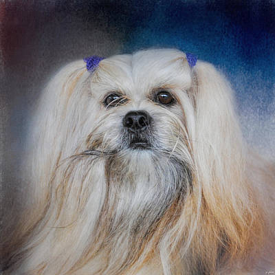 Photograph - Handsome Lhasa Apso by Jai Johnson