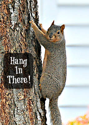 Photograph - Hang In There by Mindy Bench