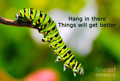 Photograph - Hang In There by Nina Silver