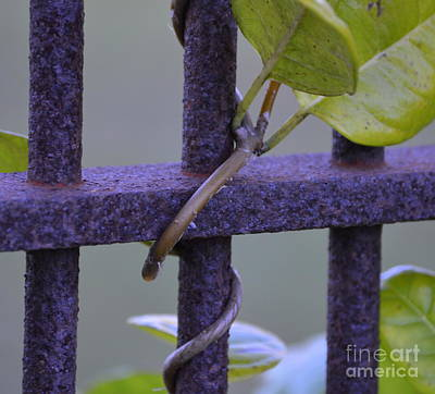 Photograph - Hang On Tight by Lew Davis