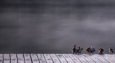 Birds Royalty-Free and Rights-Managed Images - Hangin Out by Aaron Bedell