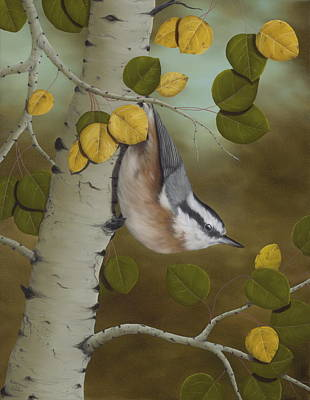 Aspen Trees Painting - Hanging Around-red Breasted Nuthatch by Rick Bainbridge