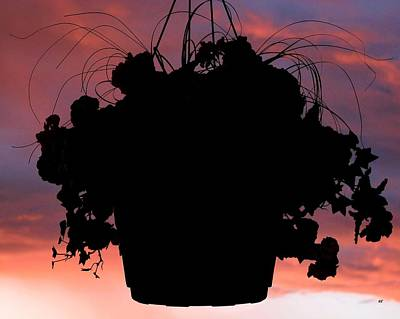 Hanging Baskets Photograph - Hanging Basket Silhouette by Will Borden
