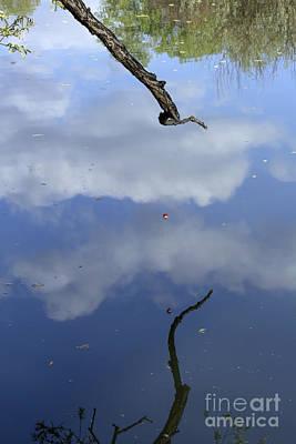 Photograph - Hanging Bobber by Steven Parker