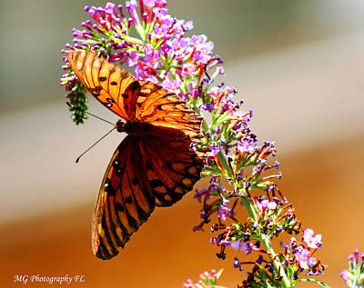 Photograph - Hanging Butterfly by Marty Gayler