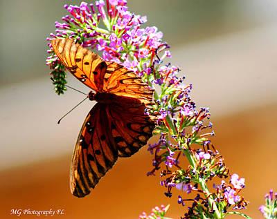 Hanging Butterfly Art Print