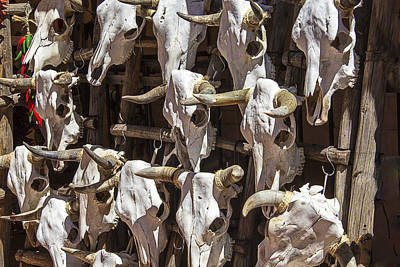 Cow Skull Photograph - Hanging Cow Skulls by Garry Gay