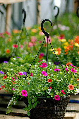 Hanging Flower Baskets Shallow Dof Print by Amy Cicconi