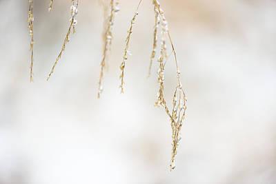 Hanging Frozen Grass Art Print