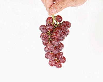 Photograph - Hanging Grapes by James BO Insogna