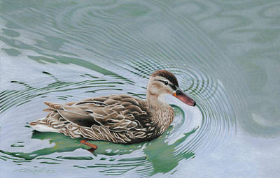Duck Water Pencil Drawing - Hanging Hearts Lake Duck by Michael McIntee
