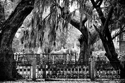 Photograph - Hanging Moss At Magnolia by John Rizzuto