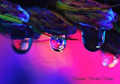 Photograph - Hanging On by Michaela Preston